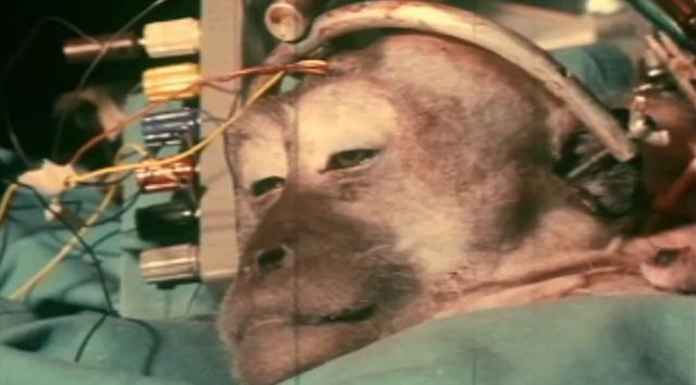 Alginatnaya la máscara para la persona y el cuerpo con la arcilla rosada las revocaciones